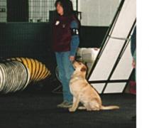 gump-ams2-march-2001