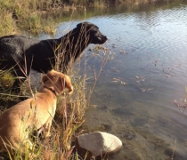 pj-and-brook-september-21-2012-swimby-pond
