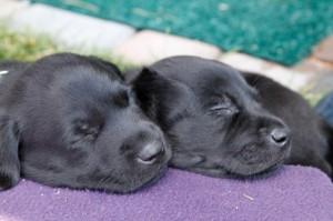2017-08-04 puppies